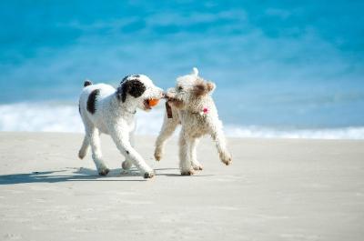 Tierhalterhaftpflicht Hunde