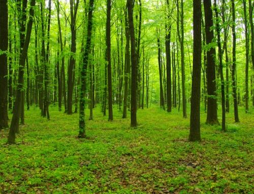 BU-Verträge: Ich sehe den Wald vor lauter Klauseln nicht