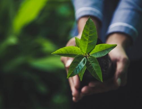 Nachhaltigkeit: Drei Säulen für die Zukunft