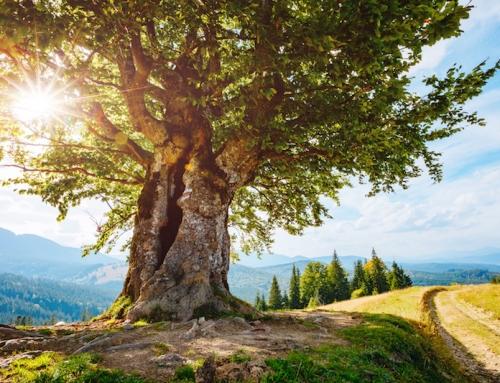 Es werde Pflicht: Ein Weg aus der Altersarmut?