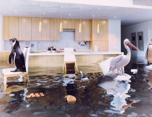 Das Haus, das aufpasst: Wie Safe Home die Existenz beschützt