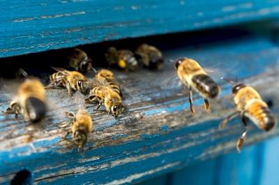 Bienen_Honig_Nachhaltigkeit