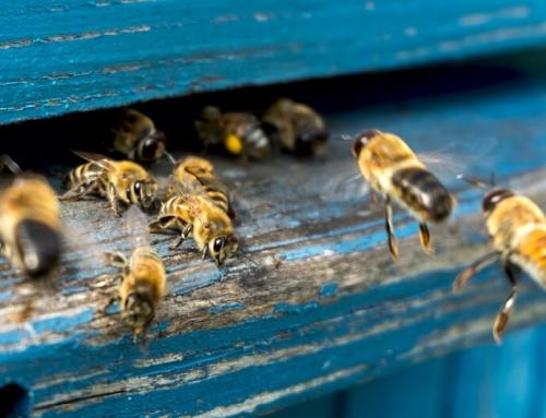 Bienen, Honig und Nachhaltigkeit – Die neue Pangaea Life Kampagne