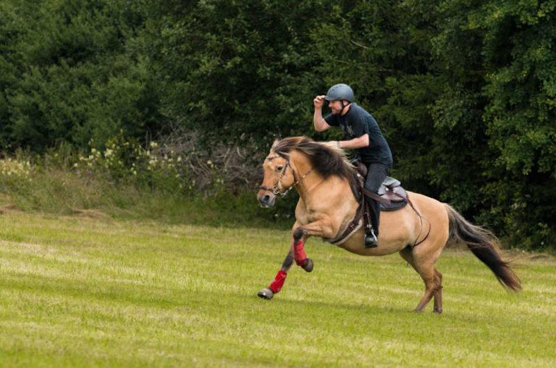 Pferdehalter-Haftpflicht Produkt kommt auf den Markt