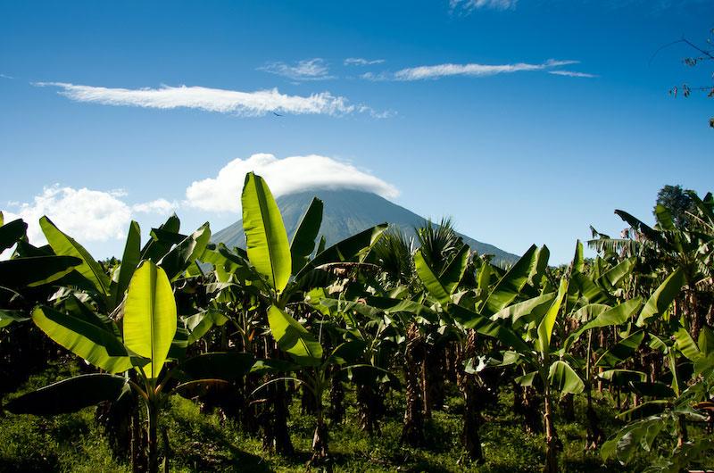 Die gelbe Gefahr: 105 Jahre Bananenschale