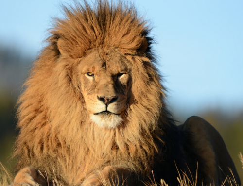Komposit-King Voting: Die Bayerische mit einer löwenstarken Komposition