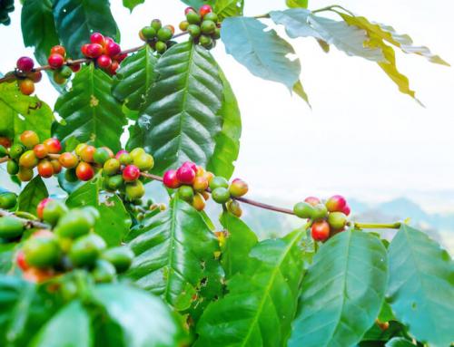 Genüssliches Jubiläum: Tag des Kaffees