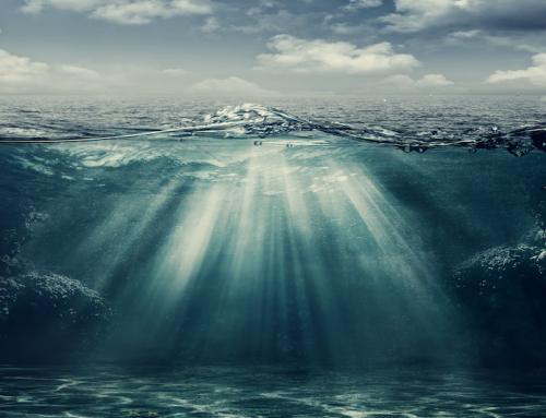 Leere Meere: Der große Fischschwund in der Nordsee
